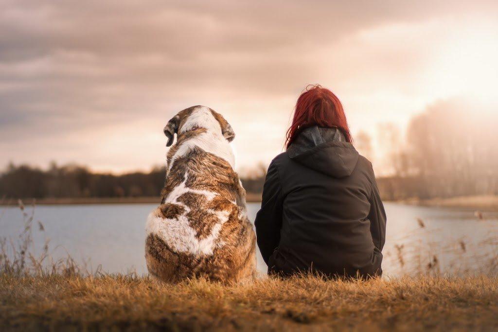 cuidados de una mascota